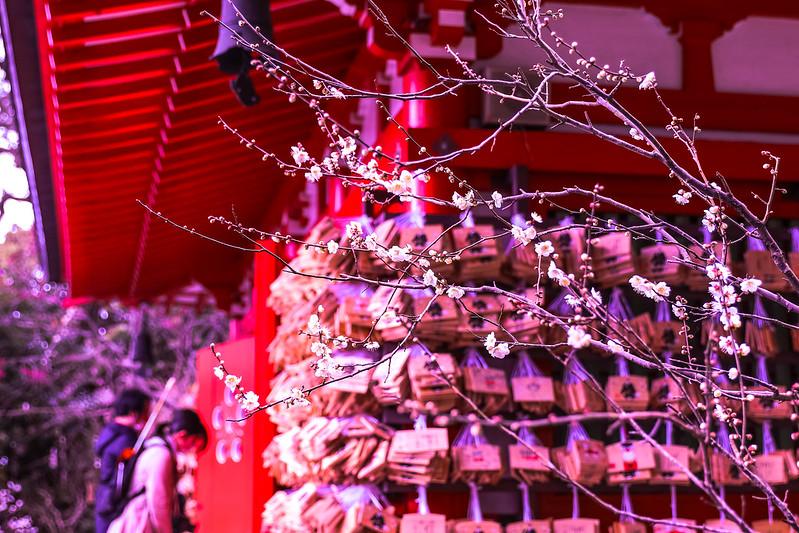 鎌倉 荏柄天神社 梅