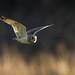 Flying Low by birdtracker