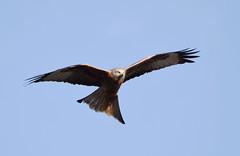 2016 Birds of Prey