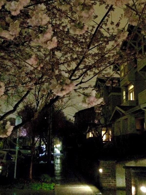 Nighttime Springtime, Harvard & Aloha #1