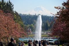 Drumheller Fountain, Mt. Rainier