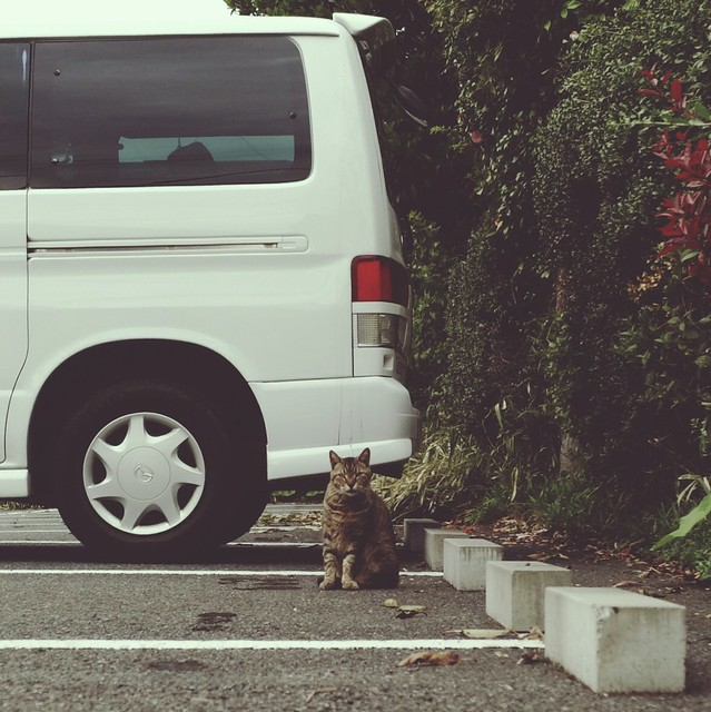 Calico cat sitting in car parking lot
