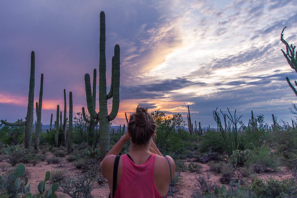 Saguaro-11