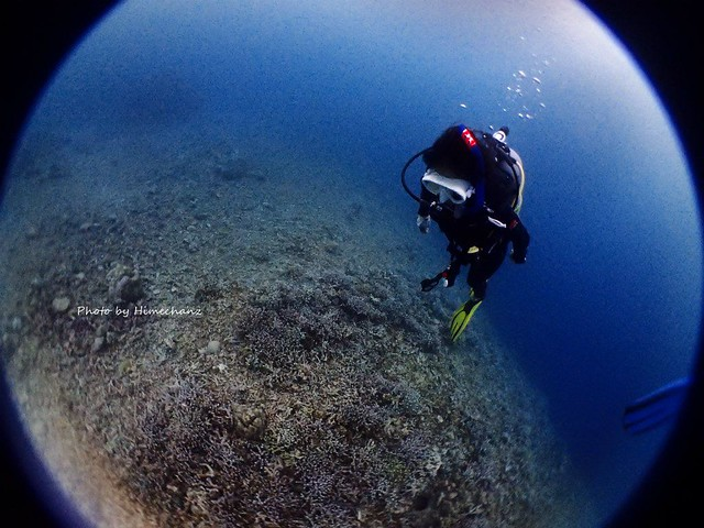 サンゴ観察をしたり、