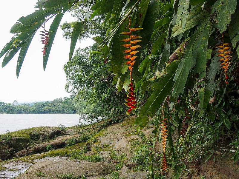 Amazon in Ecuador