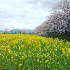 earlier at fujiwara imperial site❤︎  #latergram #fujiwaraimperialsite #nara #藤原宮跡 #奈良