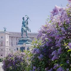 Printemps au palais de Hofburg, les lilas sont en fleurs. Sur les pelouses voisines, les uns se reposent au soleil, d'autres jouent au foot. La lenteur d'un week-end à Vienne.  Spring at Hofburg. Flowers are blooming. On the lawn, some are resting in the