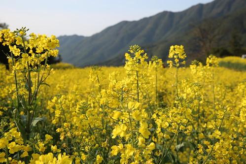 中國最美麗的鄉村-婺源.徽南古村落-張寶齊