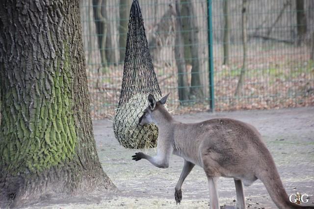 1. Feiertag im Tierpark Berlin47