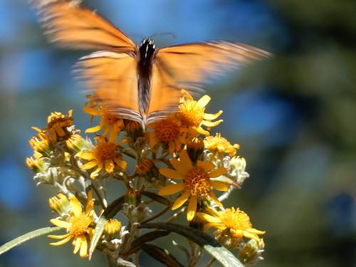 Reserva Mariposa Monarca - 2