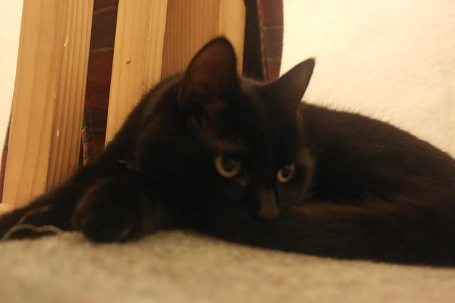 Cat B