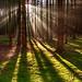 Waldmorgen by isnogud_CT