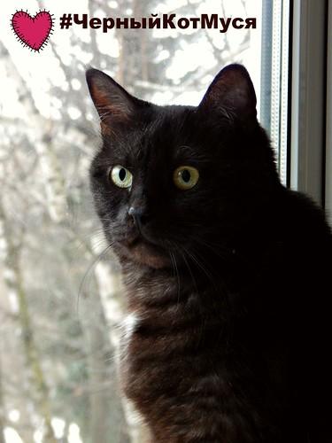 чёрный кот Муся - самый прекрасный кот на свете | Хорошо.Громко.