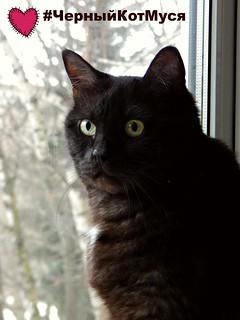 musia-the-black-cat-for-pinterest