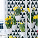 Narzisse ist Zimmerpflanze des Monats