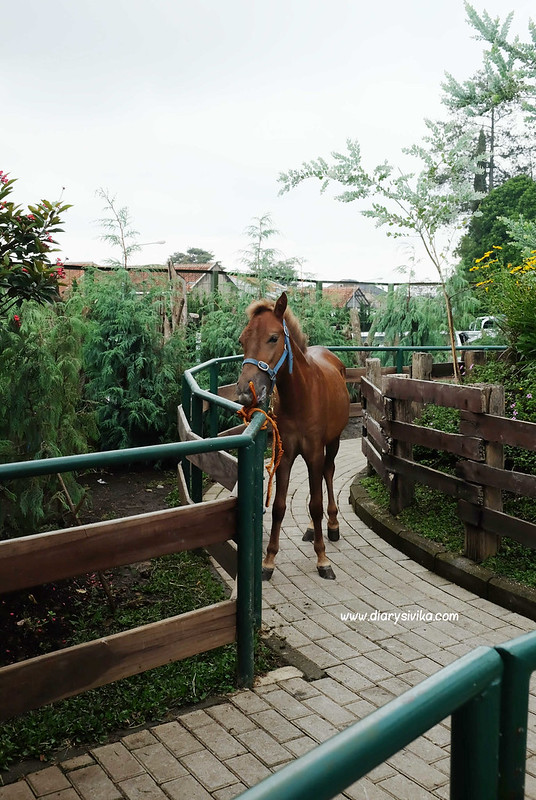 farm house Lembang 21