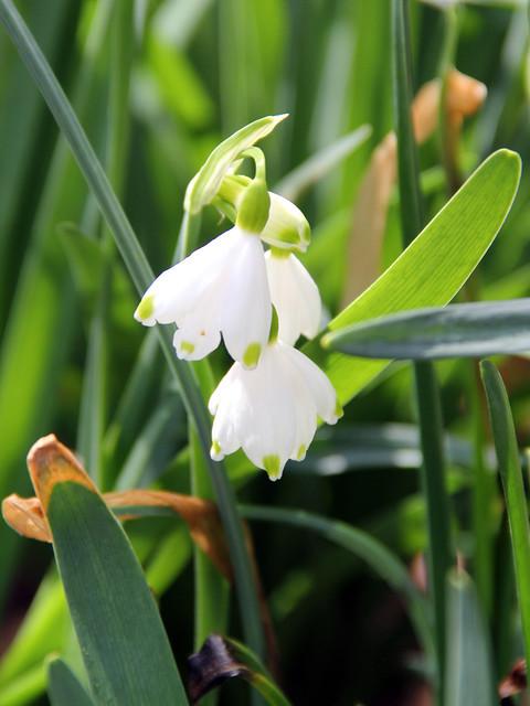 20160327_WV_Botanic_Garden_007