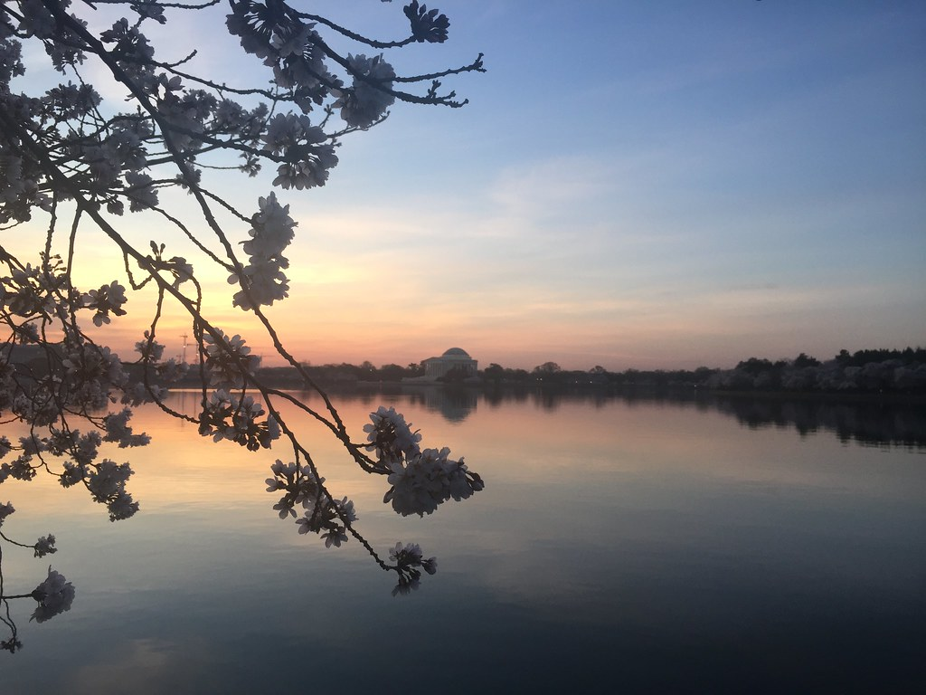 Dawn at the Jefferson Memorial with cherry blossoms