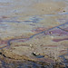 Spring low tide by Sally Dowe