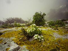 Lichen comes first