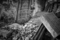 Jewish Cemetery, Warsaw. February 2016.