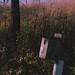 Pheasant Branch Creek Conservancy