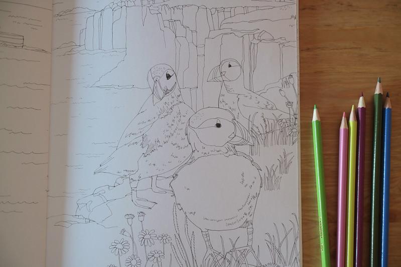 los pájaros del mundo para colorear