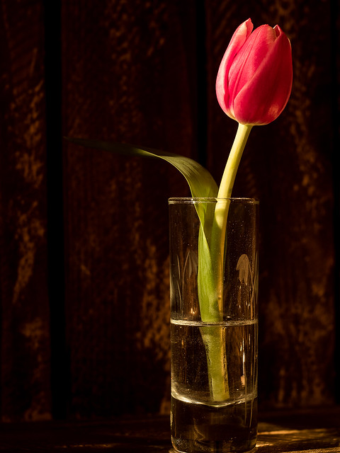 Tulips by Candlelight