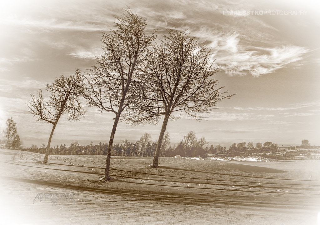 Silhouette 007 - Naked Trees on a cold Winter Day
