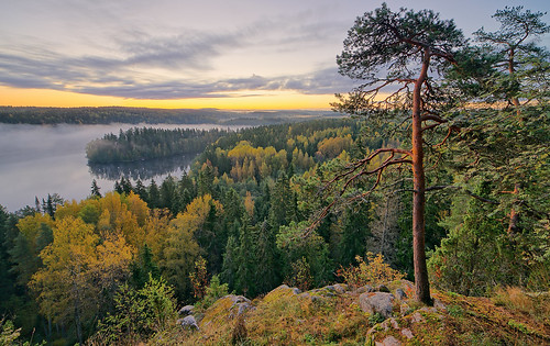 morning autumn mist lake tree fall nature weather misty fog forest sunrise finland season landscape dawn countryside haze woods scenery colorful europe glow outdoor vibrant background hill foggy scenic peaceful tranquility aerialview calm fantasy silence naturereserve serenity mysterious mystical glowing peninsula magical idyllic tranquil hdr mystic foreland aulanko