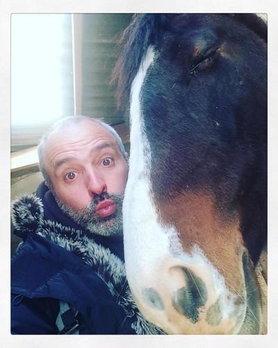 #moi #cheval #horse #france #lyon #selfie #tête #lol #sleep