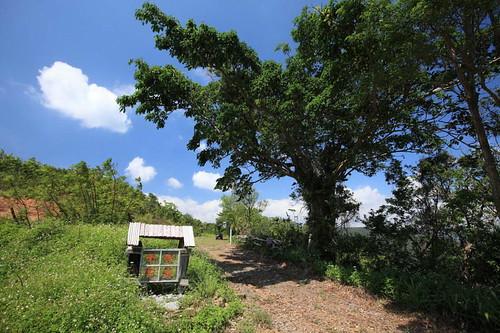 台東縣大武鄉山豬窟休閒農場周邊景點吃喝玩樂懶人包 (3)
