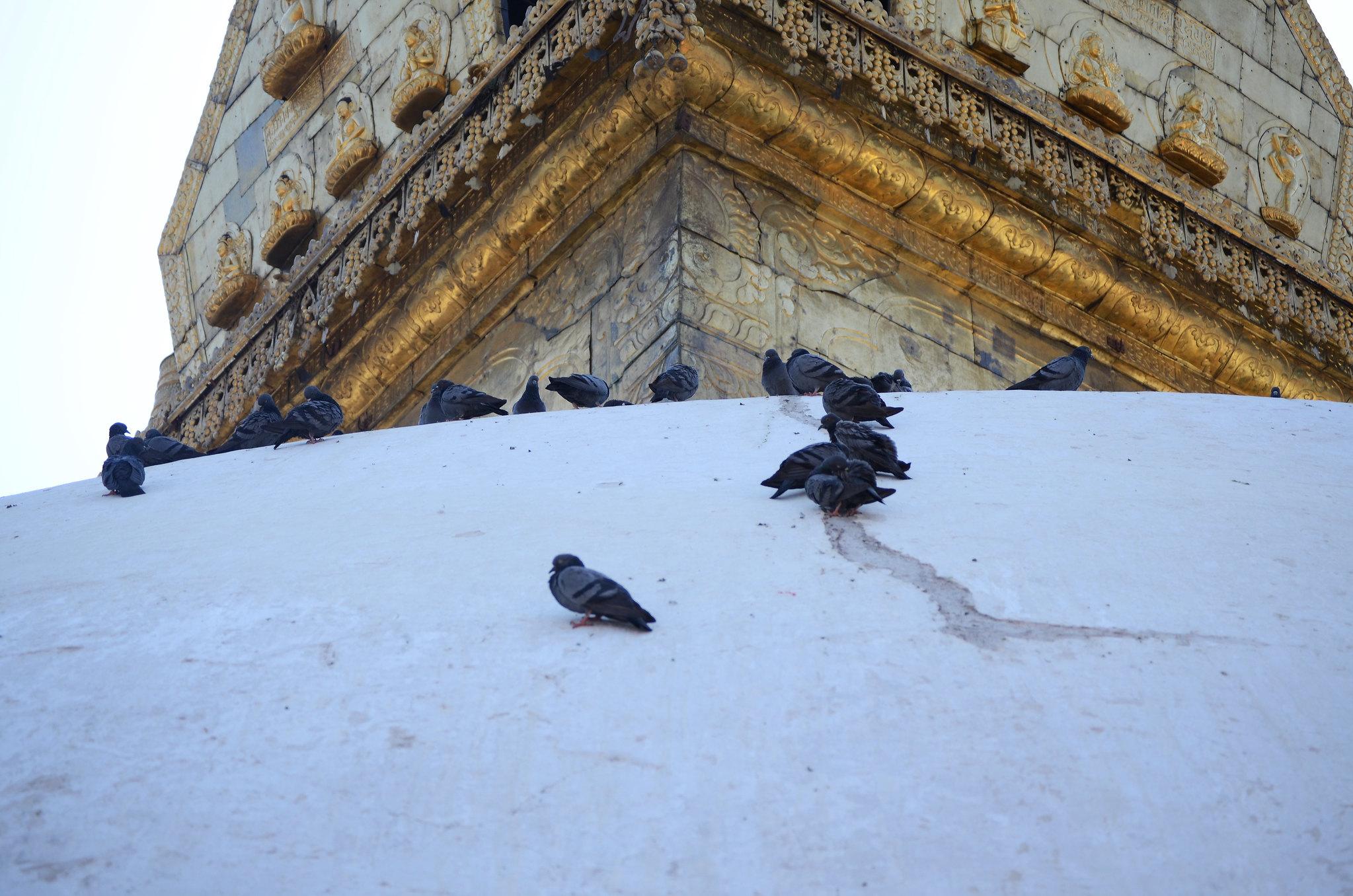 Pigeons on Stupa