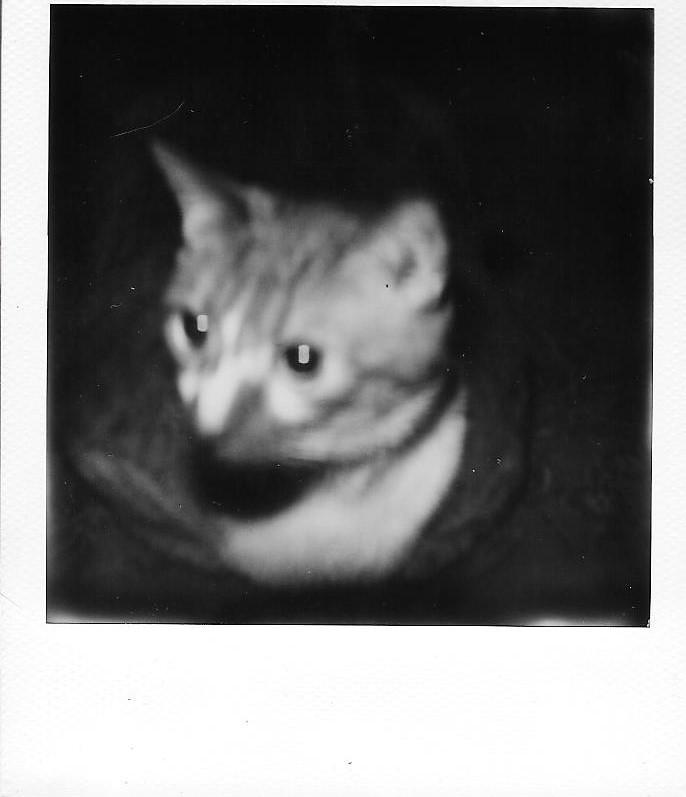My Cat, Tom
