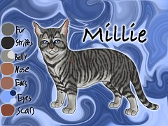 Millie of ThunderClan2