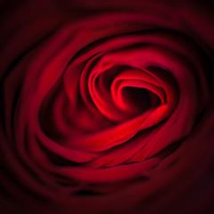 Valentine Rose - 1321-_MG_9812