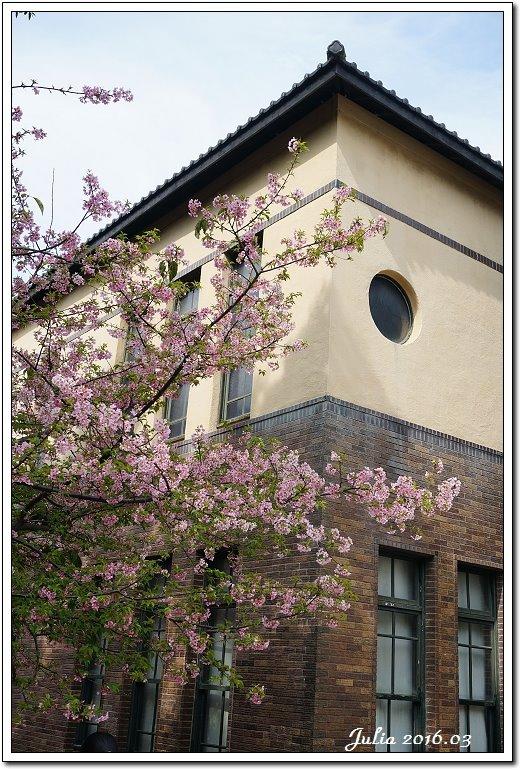麗池公園河津櫻 (8)