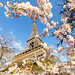 Cherry Blossom and Eiffel Tower in Paris at Spring by Loïc Lagarde