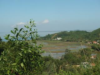 Rice Paddies near Phước Tượng and Đầm Cầu Hai