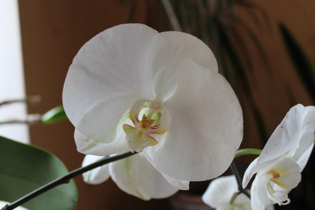 Durée de floraison 26511894951_56eb5b0dc9_b