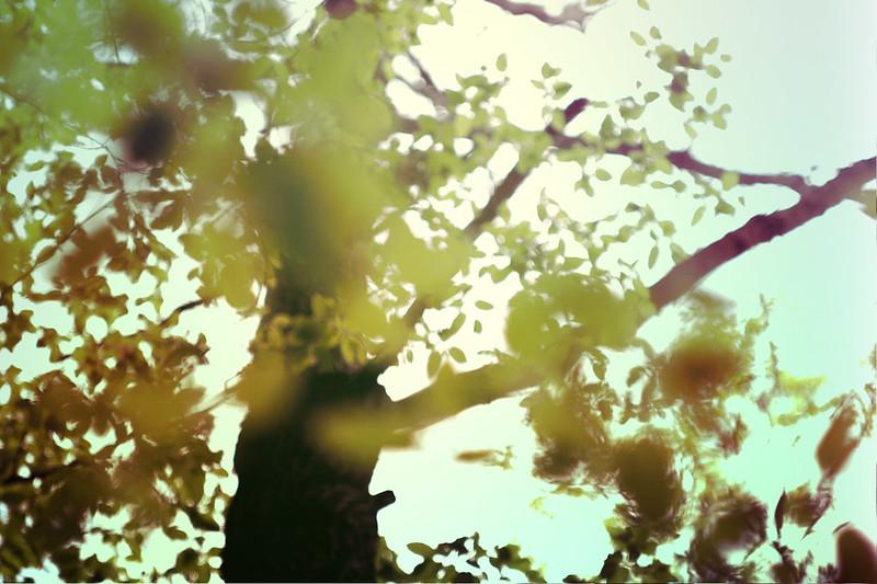 blur-dreamy-texture-texturepalace-42