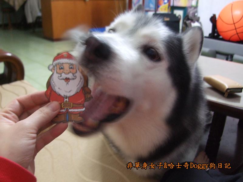 Doggy聖誕節紅色聖誕樹髮箍裝扮08
