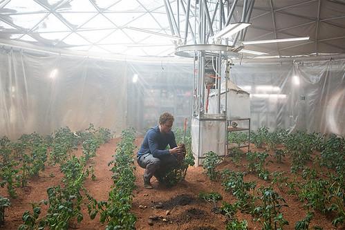 выращиванеие картошки