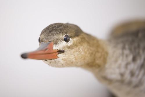 Acopian Center for Ornithology - 11