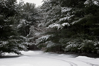 39/366 - A road in the snowy wood