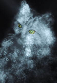 Smoky Kitty