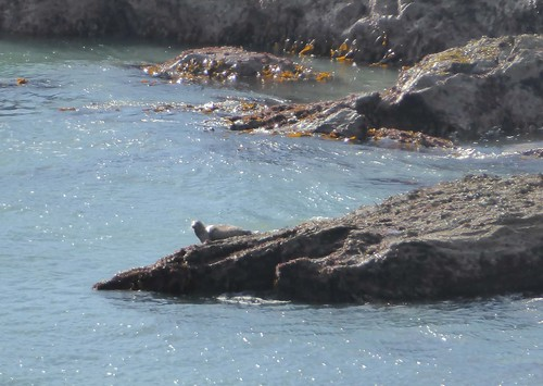 Seal at Peartree Point