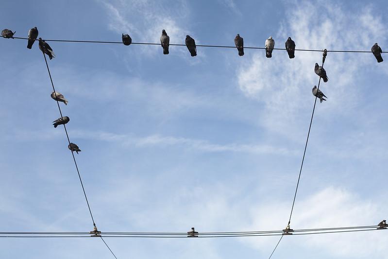 Lisbon birds square