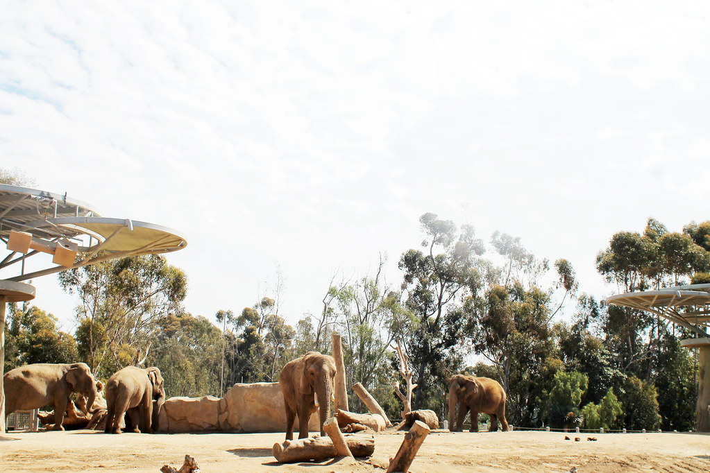 san diego zoo 2016
