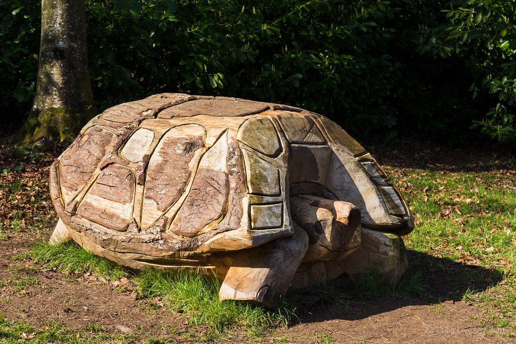 Tortoise in the Play Area